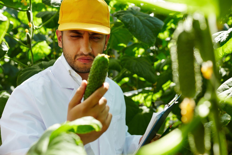 Ein Farmer beäugt skeptisch eine Gurke. Thema: Precision Farming